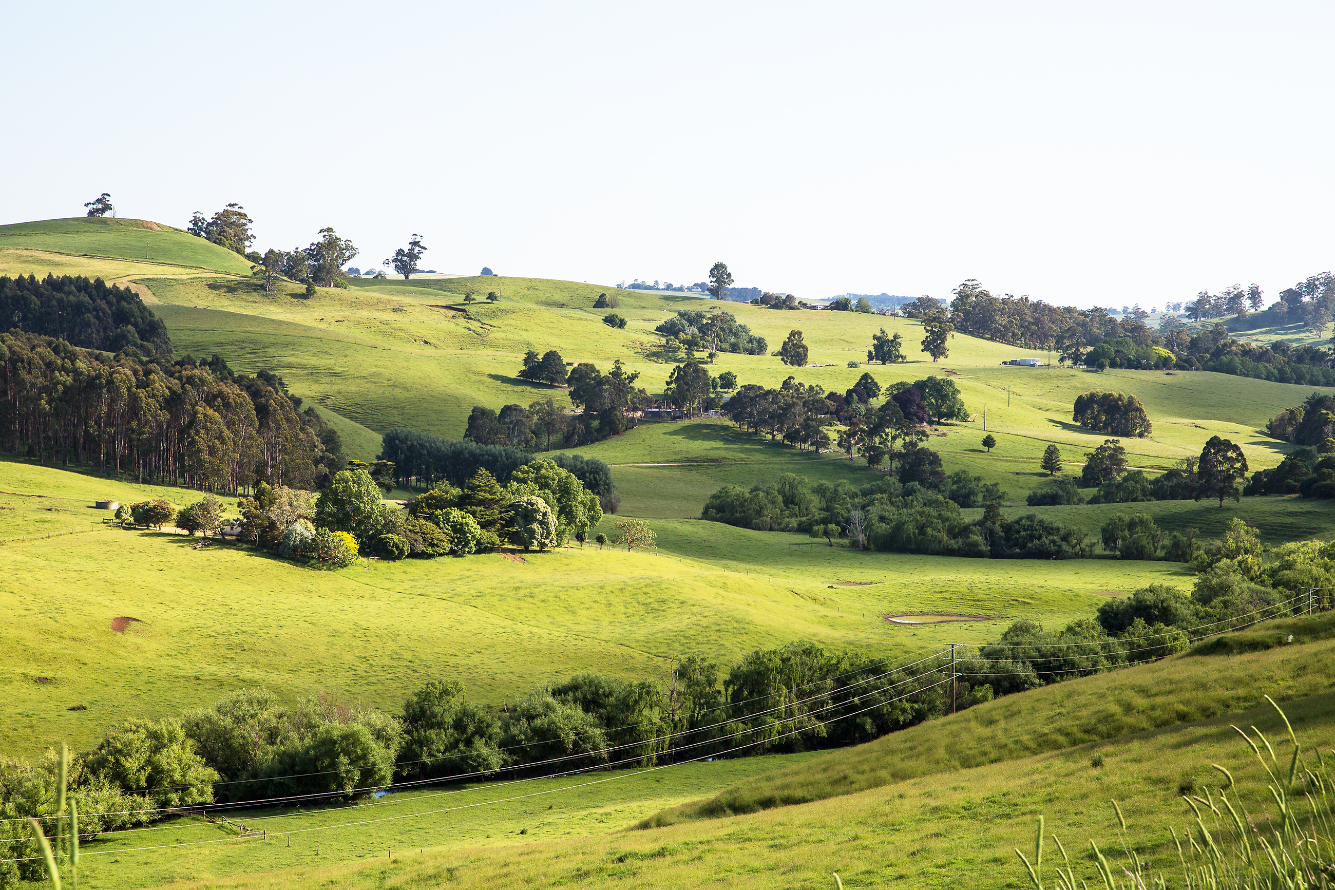 Grand Ridge Road, Gippsland